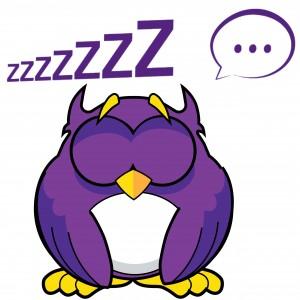Owl asleep