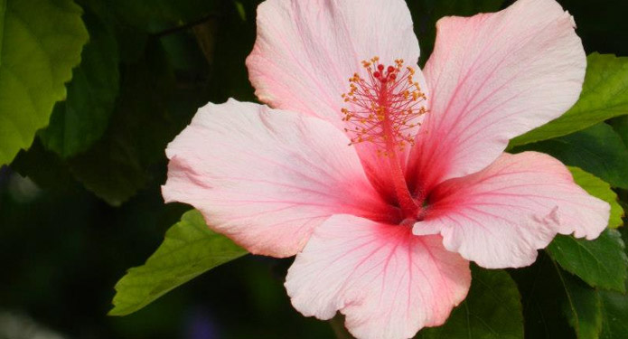 http://centrealgarve.org/wp-content/uploads/2014/07/flowers.jpg