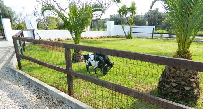 http://centrealgarve.org/wp-content/uploads/2014/07/goats.jpg