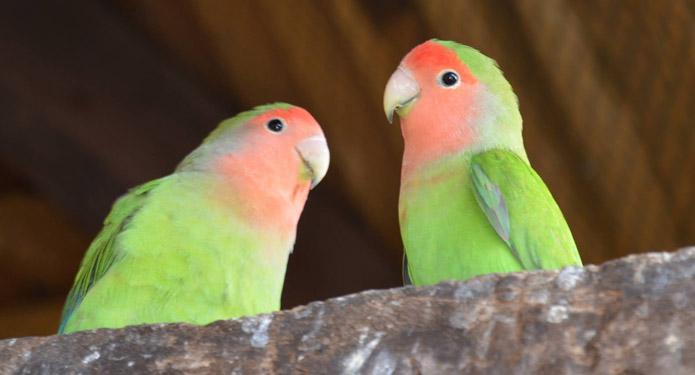 http://centrealgarve.org/wp-content/uploads/2014/07/love-birds.jpg
