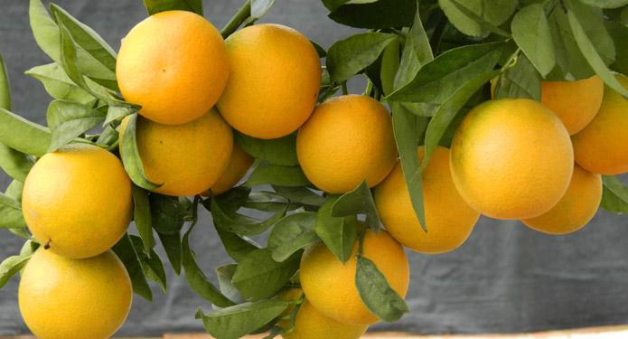 http://centrealgarve.org/wp-content/uploads/2014/07/oranges.jpg