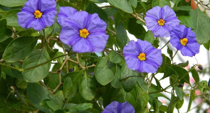 http://centrealgarve.org/wp-content/uploads/2014/07/purple-flowers.jpg