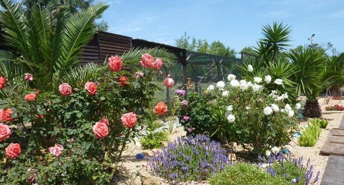 http://centrealgarve.org/wp-content/uploads/2014/07/rose-garden.jpg