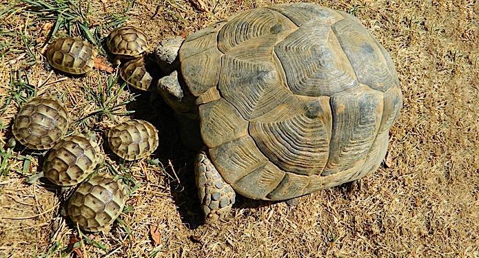 http://centrealgarve.org/wp-content/uploads/2014/10/Tortoise.jpg