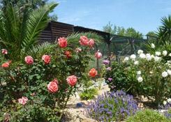 Sensory and Veg Garden